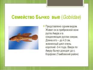 Семейство Бычко́вые (Gobiidae) Представлено одним видом. Живет он в прибрежно