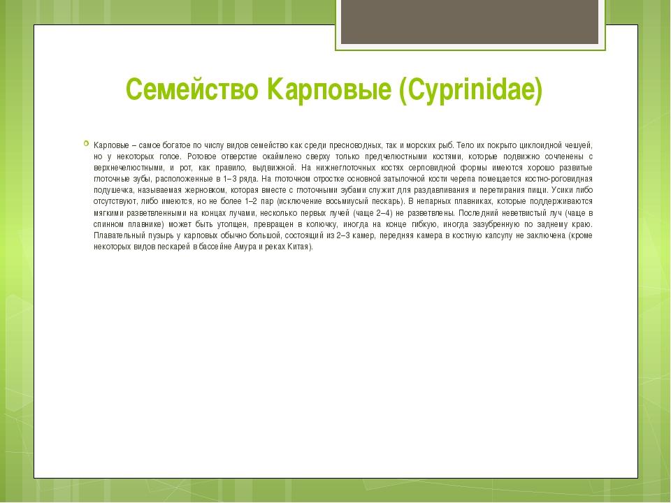 Семейство Карповые (Cyprinidae) Карповые – самое богатое по числу видов семей...