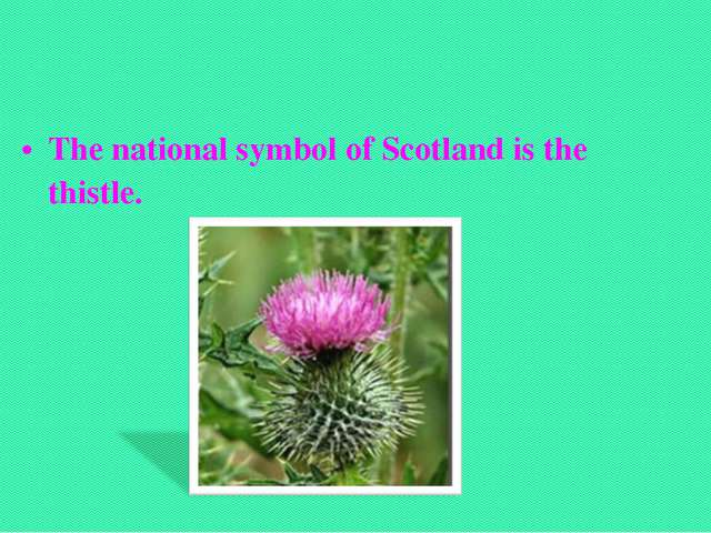 The national symbol of Scotland is the thistle.