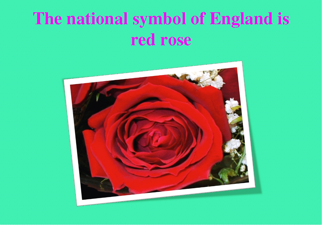 The national symbol of England is red rose