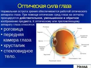 Оптическая сила глаза Нормальная острота зрения обеспечивается работой оптиче