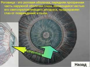 Роговица - это роговая оболочка, передняя прозрачная часть наружной оболочки