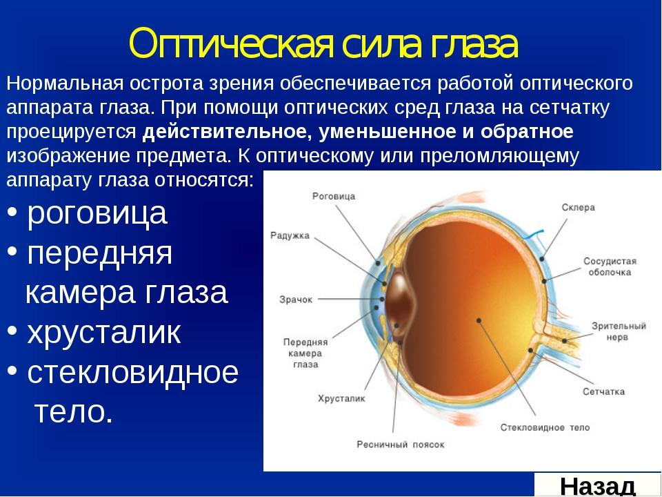 Оптическая сила глаза Нормальная острота зрения обеспечивается работой оптиче...