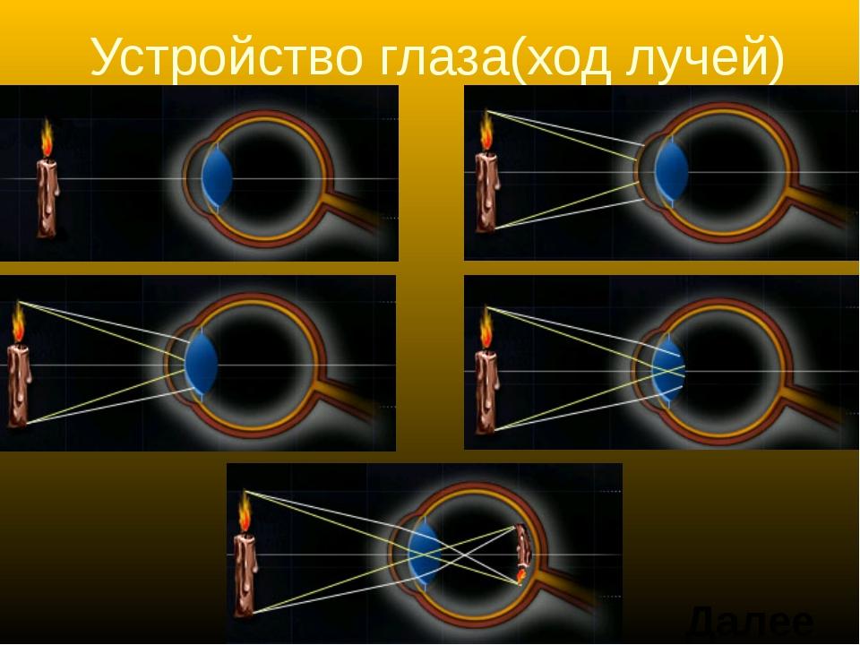 Устройство глаза(ход лучей) Далее