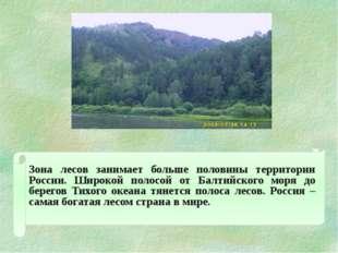 Зона лесов занимает больше половины территории России. Широкой полосой от Б