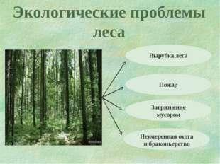 Экологические проблемы леса Вырубка леса Пожар Загрязнение мусором Неумеренна