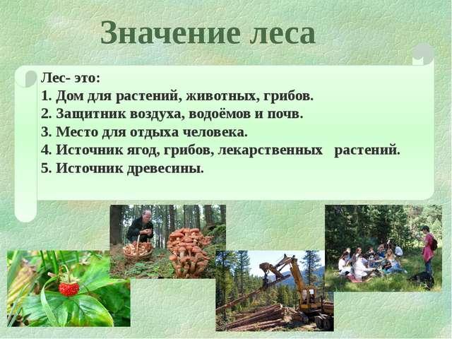 Значение леса Лес- это: 1. Дом для растений, животных, грибов. 2. Защитник во...