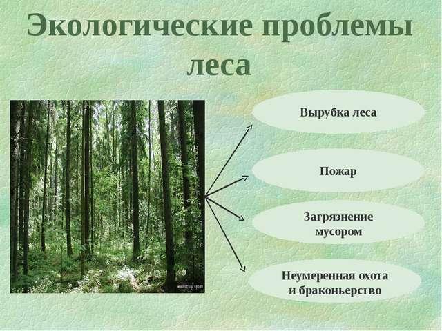 Экологические проблемы леса Вырубка леса Пожар Загрязнение мусором Неумеренна...