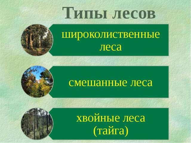 Типы лесов