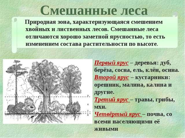 Смешанные леса Природная зона, характеризующаяся смешением хвойных и лиственн...