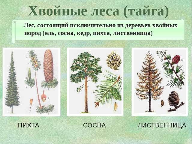 Хвойные леса (тайга) Лес, состоящий исключительно из деревьев хвойных пород (...