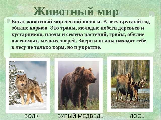 Животный мир  Богат животный мир лесной полосы. В лесу круглый год обилие ко...