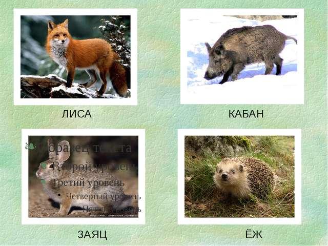 ЛИСА КАБАН ЗАЯЦ ЁЖ
