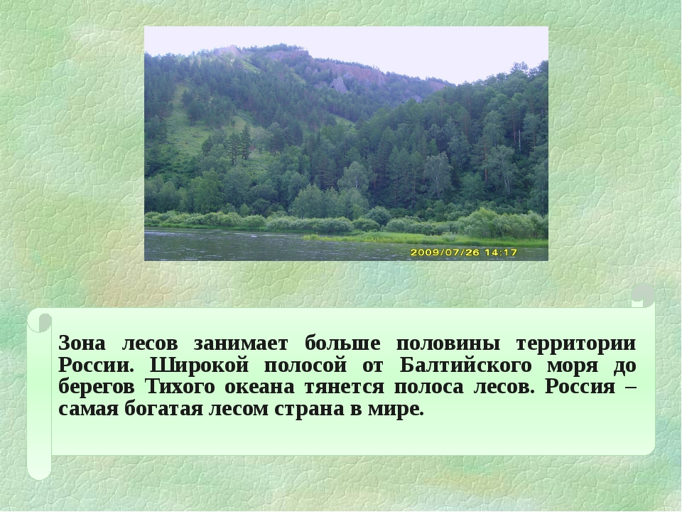 Зона лесов занимает больше половины территории России. Широкой полосой от Б...