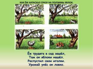 Ёж трудяга в сад зашёл, Там он яблоки нашёл. Распустил свои иголки. Урожай ун