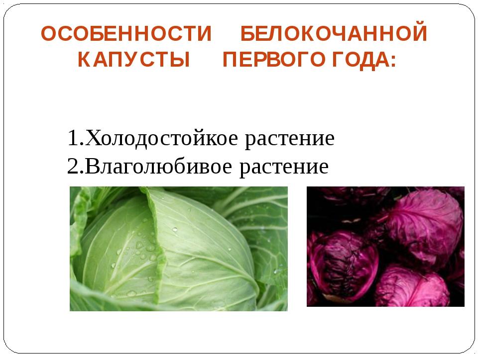 ОСОБЕННОСТИ БЕЛОКОЧАННОЙ КАПУСТЫ ПЕРВОГО ГОДА: Холодостойкое растение Влаголю...
