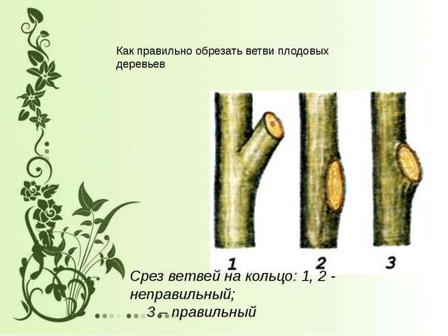 Срез ветвей на кольцо: 1, 2 - неправильный; 3 – правильный Как правильно обре...
