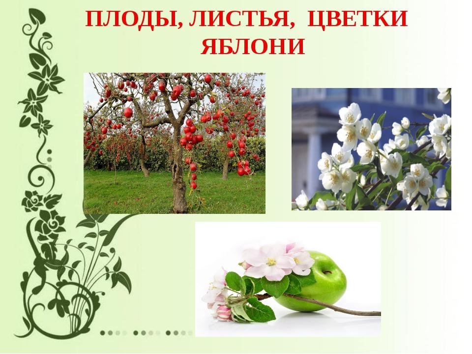 Листья и цветы яблони