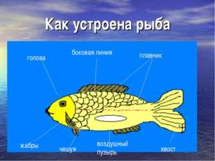 Как устроена рыба жабры чешуя воздушный пузырь хвост боковая линия плавник го