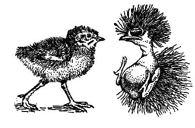 Лекция 14. . Класс Птицы (Aves) Характеристика класса