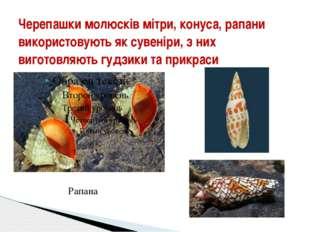 Черепашки молюсків мітри, конуса, рапани використовують як сувеніри, з них ви