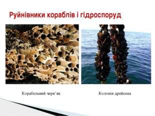 Руйнівники кораблів і гідроспоруд Корабельний черв'як Колонія дрейсена