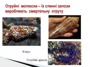 Отруйні молюски – їх слинні залози виробляють смертельну отруту Конус Голубий
