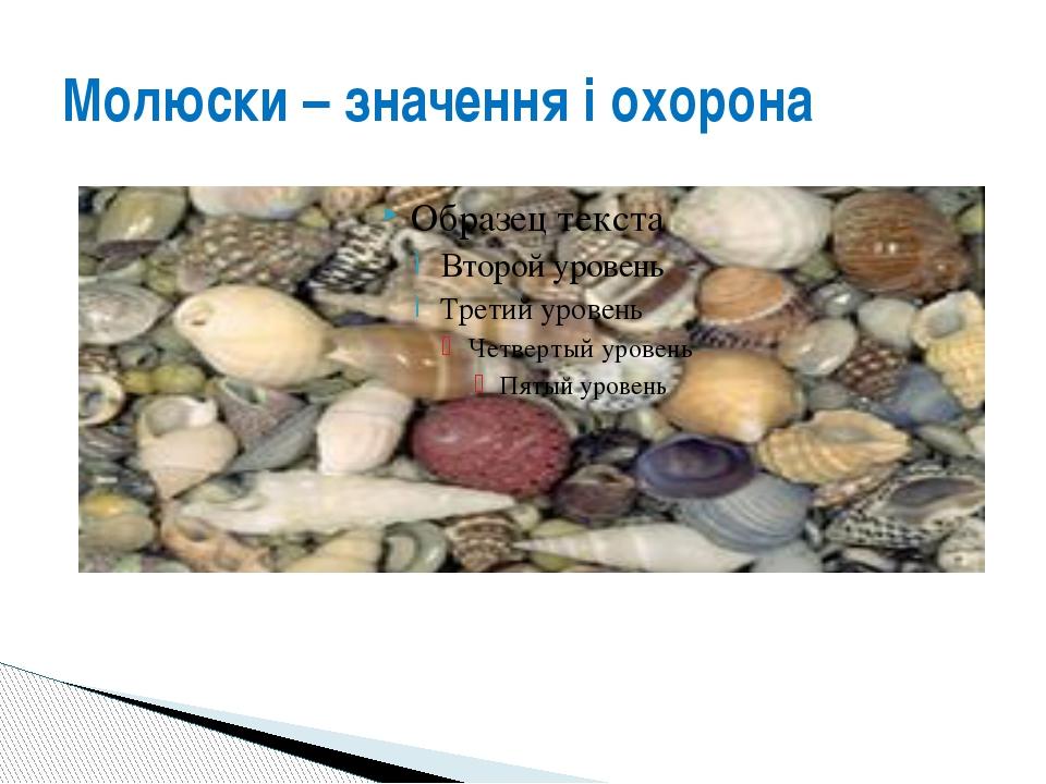 Молюски – значення і охорона