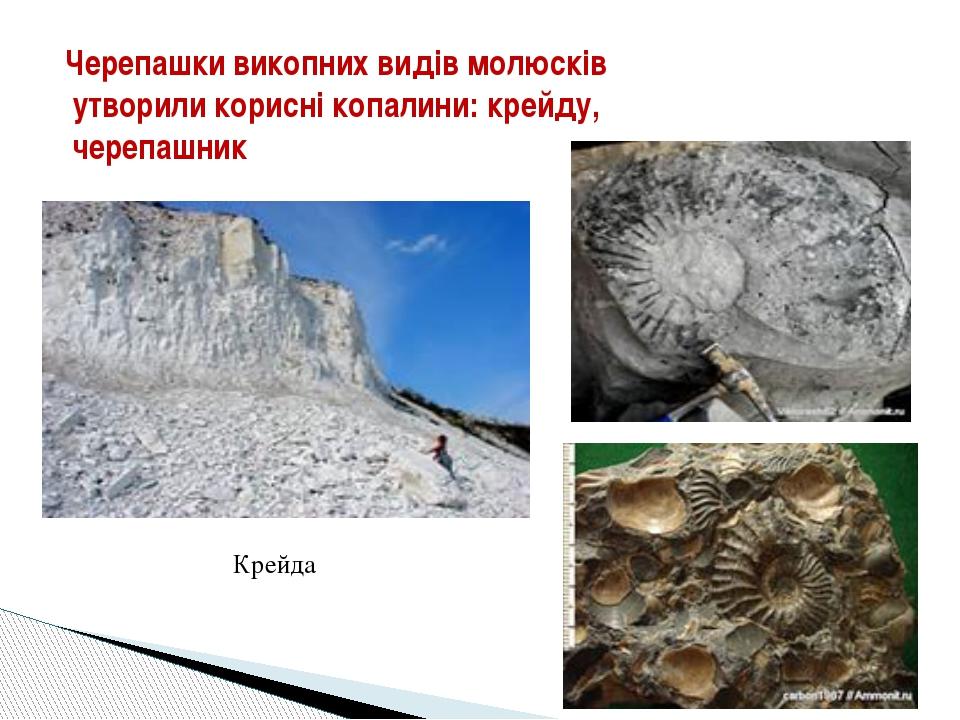 Черепашки викопних видів молюсків утворили корисні копалини: крейду, черепаш...