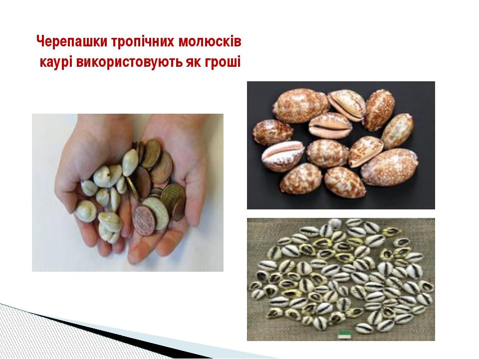 Черепашки тропічних молюсків каурі використовують як гроші