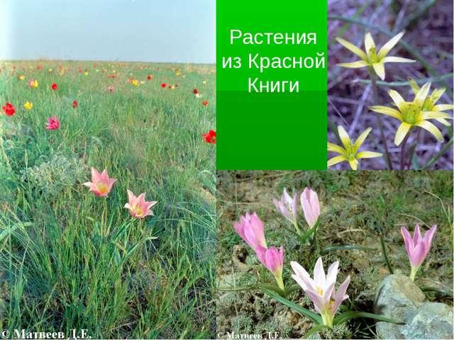 Растения из Красной Книги