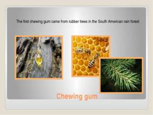 Chewing gum The first chewing gum came from rubber trees in the South America