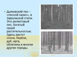 Дьяковский лес – «лесной оазис», в Заволжской степи. Это реликтовый лес, бога
