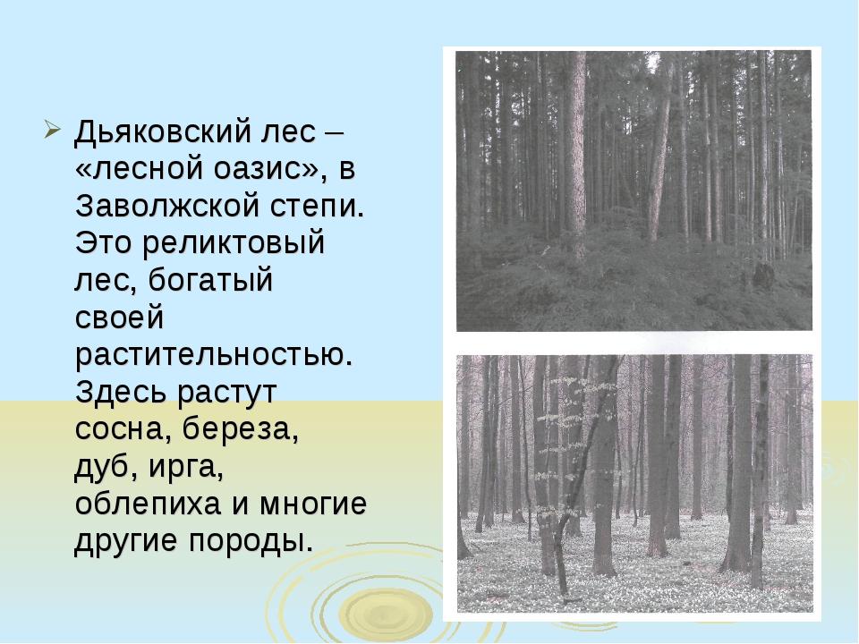 Дьяковский лес – «лесной оазис», в Заволжской степи. Это реликтовый лес, бога...