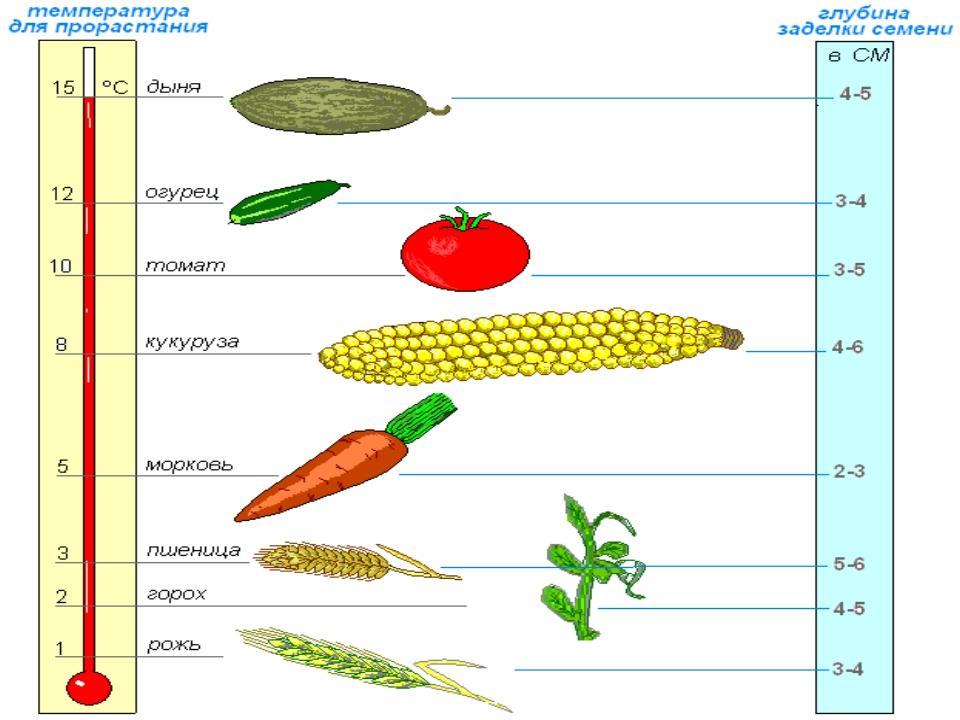 Температура для проращивания семян