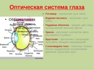Оптическая система глаза Роговица – преломляет лучи света; Водянистая влага –