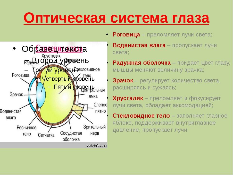 Оптическая система глаза Роговица – преломляет лучи света; Водянистая влага –...