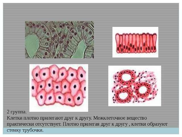 2 группа. Клетки плотно прилегают друг к другу. Межклеточное вещество практич...