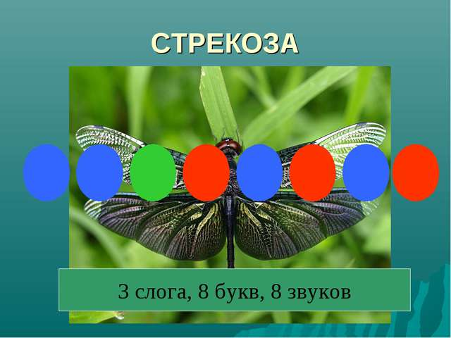 СТРЕКОЗА 3 слога, 8 букв, 8 звуков
