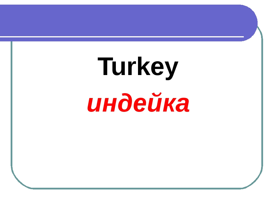 Turkey индейка