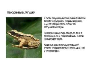 В Китае лягушки одного из видов (Odorrana tormota) живут рядом с горными река