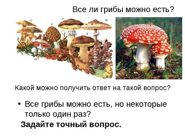 Все ли грибы можно есть? Все грибы можно есть, но некоторые только один раз?...
