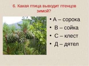 6. Какая птица выводит птенцов зимой? А – сорока В – сойка С – клест Д – дятел