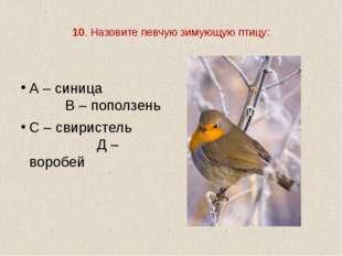 10. Назовите певчую зимующую птицу: А – синица В – поползень С – свиристель