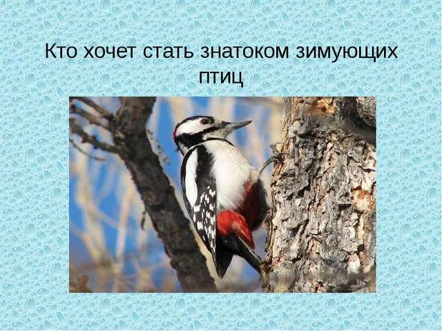 Кто хочет стать знатоком зимующих птиц