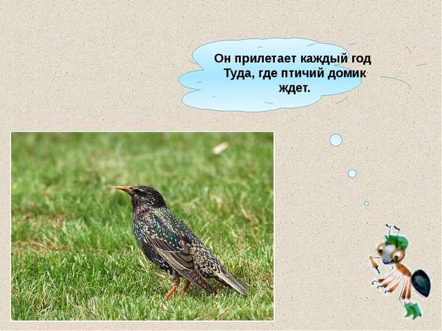 Онприлетает каждый год Туда, где птичий домик ждет.