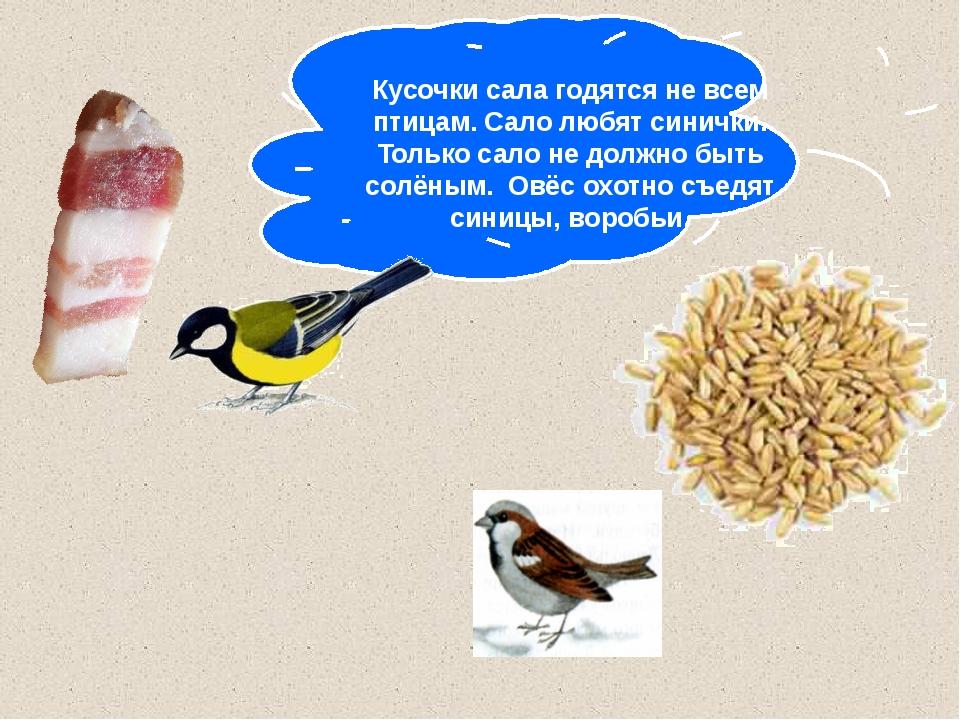 Кусочки сала годятся не всем птицам. Сало любят синички. Только сало не долж...