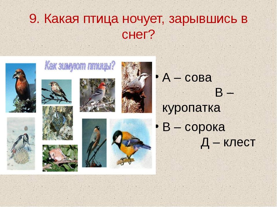 9. Какая птица ночует, зарывшись в снег? А – сова В – куропатка В – сорока Д...