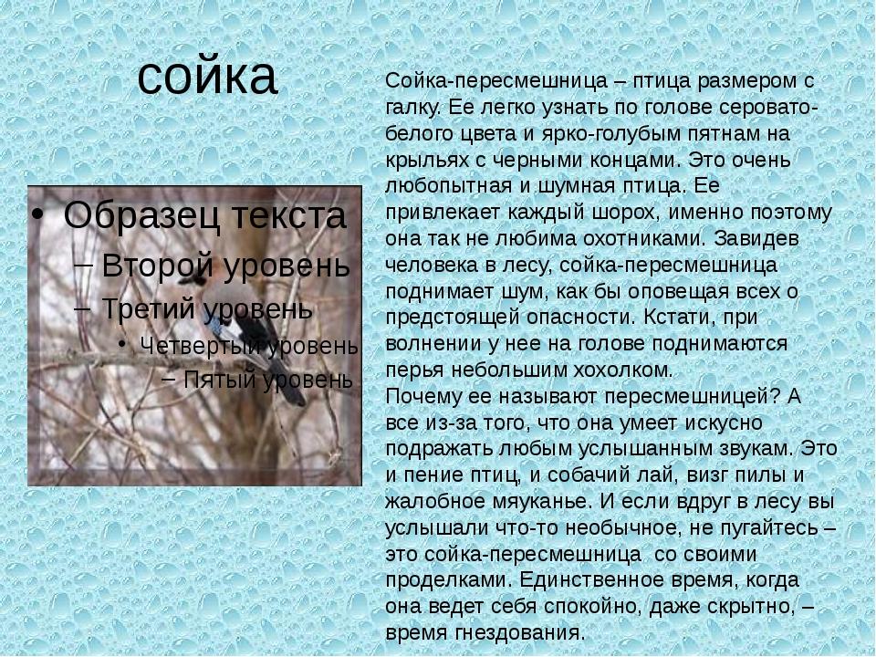 сойка Сойка-пересмешница – птица размером с галку. Ее легко узнать по голове...