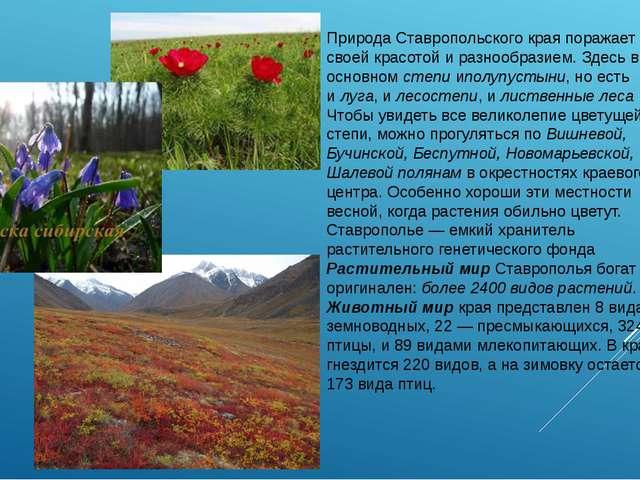Природа Ставропольского края поражает своей красотой и разнообразием. Здесь в...